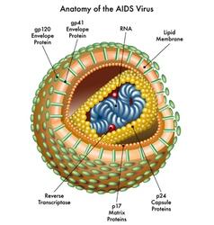 Aids vector