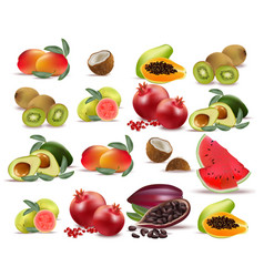 Fruits coconut avocado papaya kiwi pomegranate vector