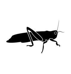 grasshoper vector image vector image