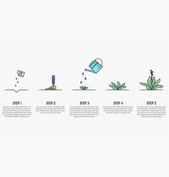 Growing stages of plant vector