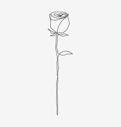 Rose flower line drawing vector