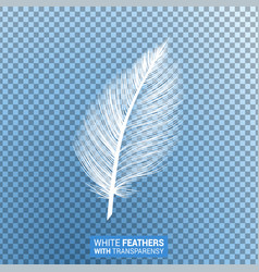 White fluffy feather realistic transparent effect vector