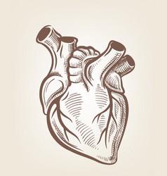 medical heart vector image
