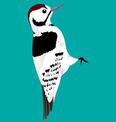 woodpecker vector image vector image