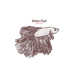 Betta fish hand draw sketch vector