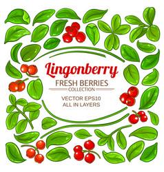 lingonberry elements set vector image