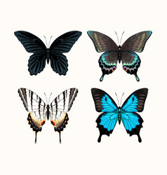 set high detailed tropic butterflies vector image