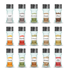 Spices pepper seeds and condiment set vector