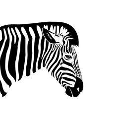 Zebra head on a white background wild animals vector