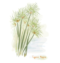 papyrus plant watercolor style vector image vector image