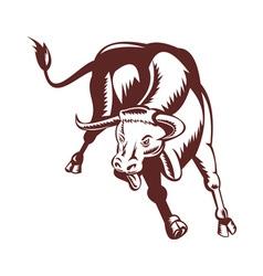angry texas longhorn bull charging vector image