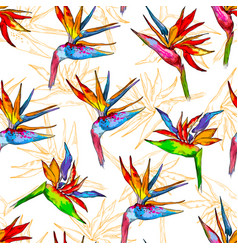 seamless pattern of colorful strelitzia collection vector image