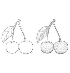 cherries hand drawn sketch vector image
