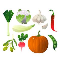 different vegetables pumpkin zucchini pepper city vector image