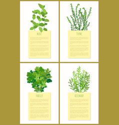 mint thyme parsley and rosemary flowers set banner vector image
