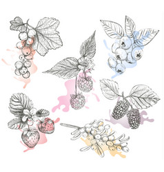 Sketch berries set vector