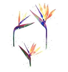 Watercolor Strelitzia flower vector image