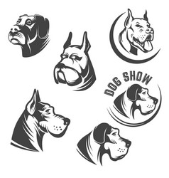 set of the dog heads icons isolated on white vector image