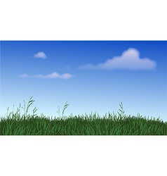 Panoramic Field of Grass vector image