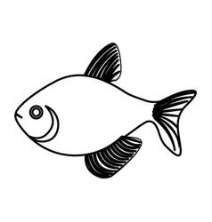silhouette fish aquatic animal icon vector image