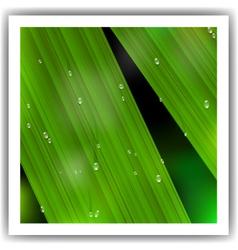 macro leaf vector image