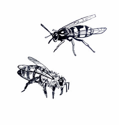 bee and wasp line drawing vector image