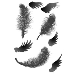 black feathers and wings vector image