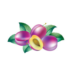 plums and leaves vector image