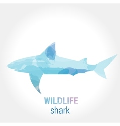 Wildlife banner - fish shark vector image
