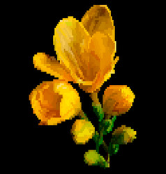 yellow meadow flowers pixel art vector image