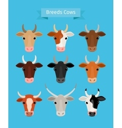 Cow heads set vector image
