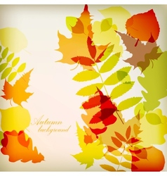 Bright colorful autumn leaves vector image vector image