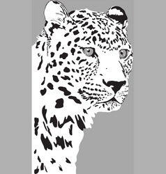 black and white portrait spoted leopard vector image