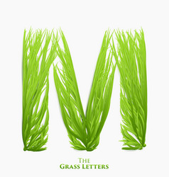 Letter m of juicy grass alphabet green m vector