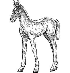 Sketch a newborn foal vector