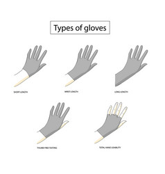 Types of gloves vector