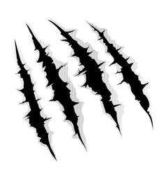 Claws scratches on white background vector