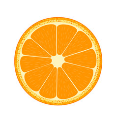 Half fruit orange vector