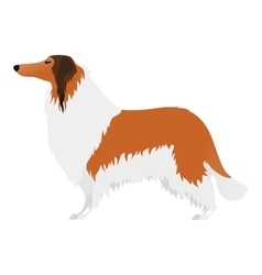 Isolated elegant large Collie dog on white vector image vector image