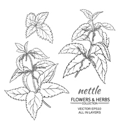 nettle set vector image
