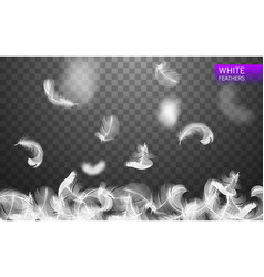 Set of isolated falling white fluffy feathers vector