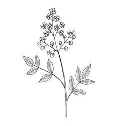 Drawing henna vector