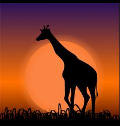 Giraffe on sunset background black silhouette vector