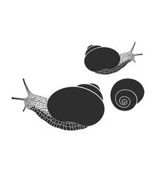 Grape snail isolated snails on white vector
