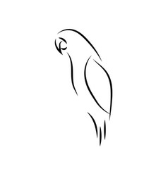 parrot bird mono line art template vector image