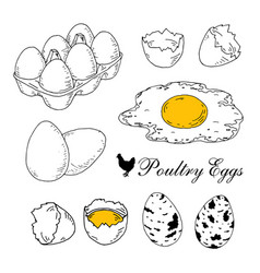 poultry eggs collection fresh in box boiled vector image