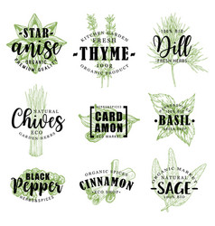 Spice or herb lettering with food condiment sketch vector