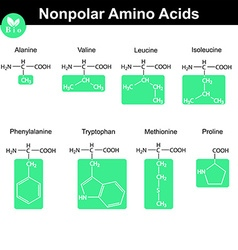 Amino acids with marked radicals nonpolar group vector