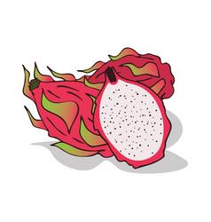 Isolate ripe pitaya or pitahaya vector