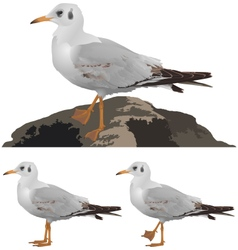 set seagulls isolated on white vector image